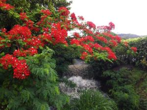 WATER FALL WITH RED FLAMBOYANT