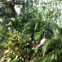 PLANT GARDEN DETAIL